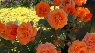 La vie en rose  Dalida