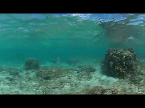 Hawaii 360 VR - Reef Dive with Theta V Camera