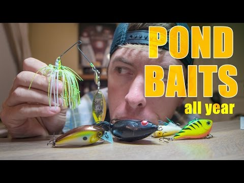 Best Pond Fishing Baits to Use Year Round