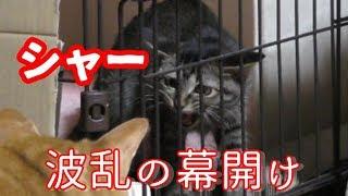 子猫がうちにやって来た 保護した子猫のお預かりボランティア「しいちゃん」後半