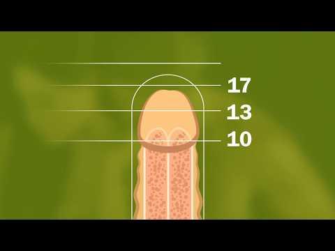 Die Videowerbefilme auf der Erhöhung des Penis