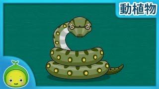 子供の理科「動植物」 アナコンダが現れた 【まめきゅん】  子供向け動物 動物の名前 子供向け知育動画  植物を育  子供向け科学