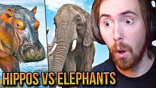 Asmongold Reacts To Are Hippos & Elephants OP?   TierZoo