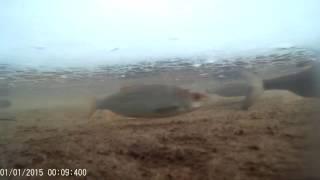 Зимняя рыбалка в кирове сегодня