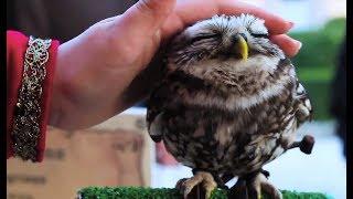 Süße und Lustige Tiervideos ( Teil 38)    ✪ Stern DuTube
