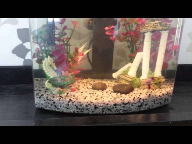 My complete betta fish tank setup!