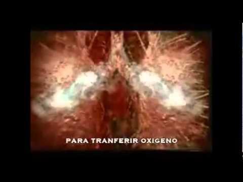 Virus del papiloma humano guatemala