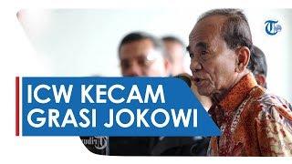 Beri Grasi Terpidana Kasus Korupsi Rp5 Miliar, ICW Kecam Grasi dari Presiden Jokowi