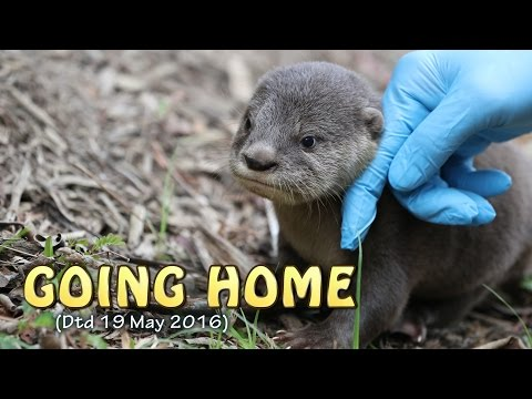 A Lost Otter Pup Is Reunited With Its Family