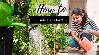 Correct Way of Watering Plants| Gardening Basics Part 3