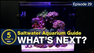 5 Minute Saltwater Aquarium Guide Episode #29 - What's Next