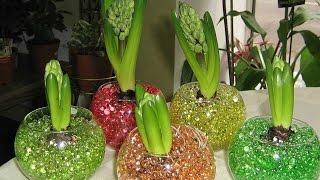 Гидрогель для комнатных растений видео