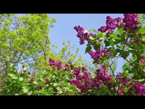 Песня самоцветы мы желаем счастья вам слушать