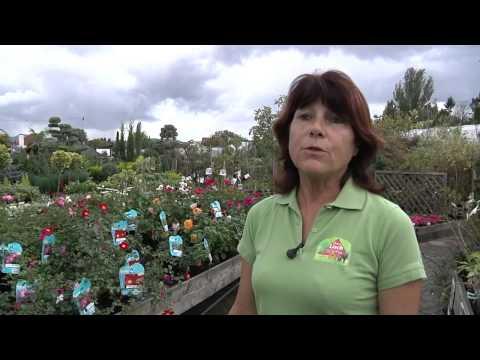 FLEURS LISCH présente les alternatives vertes !