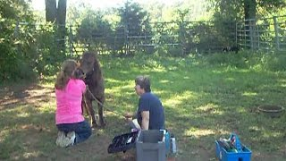 Napol's Fiesty Voice 8-4-2016 Dogwood Lane Horse Sanctuary