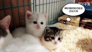 【李喜貓】我们就是这样长大的---铲屎官记录小猫咪从出生到满月的成长过程,太治愈了!