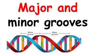 Major groove and minor groove