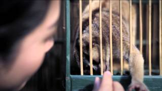 UNODC Wildlife Crime Dont Be Part Of It  Bahasa 60 Seconds