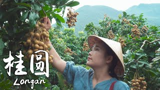 「One Fruit for a Table」——Crystal clear longan
