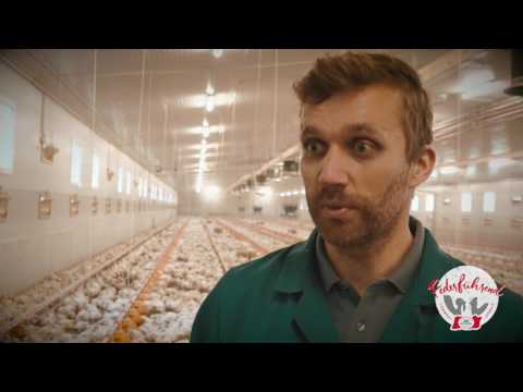 Das Tierwohl - Medikamentengabe