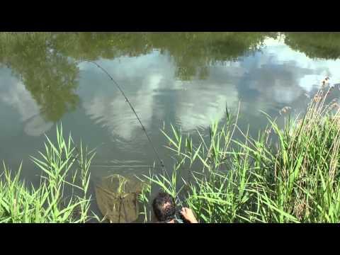 Stalking af karper med flydende boilies