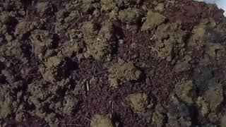 African Night Crawler - Food Preference