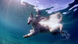 To The Arctic - Swimming With Polar Bears