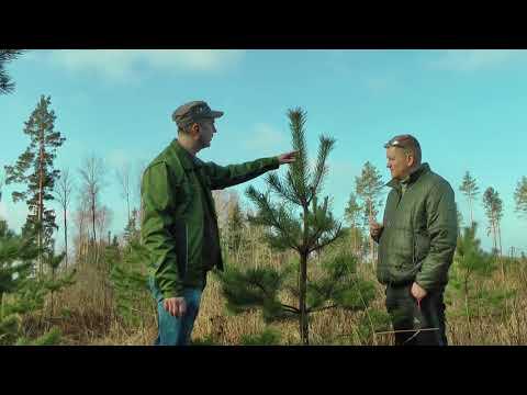 """LVM meža apsaimniekošana """"Pieejamās barības bāzes palielināšana dzīvniekiem"""""""