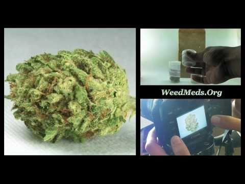 CPA Nuggetry Blackberry Kush (Medical Marijuana)