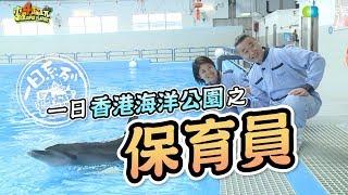 《一日系列第六十三集》香港我們來了!邰邰保育員帶著廣東木曜粉前進海洋公園囉~-一日香港海洋公園保育員