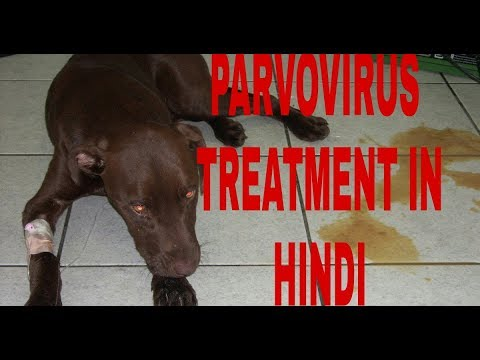 How To Make Parvovirus Treatment At Home ! Dog Ultimate Care  !