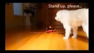 Подборка смешных видео приколов 2014 смешное видео с кошками приколы видео с животными! НОВИНКА