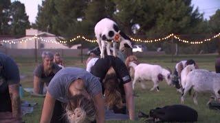 Goat Yoga Inside Edition