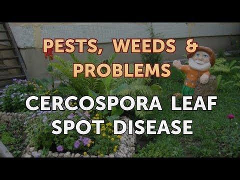 Parazitákezelo gyógyszerek