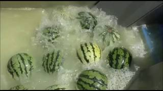 Watermelon Water Production
