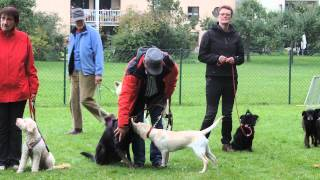 preview picture of video 'Die Alternativen Hundefreunde bei der Langen Tafel Dachau Teil 3'