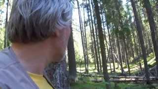 Велопрогулка по лесу 00117. Остановился, - кругом полно черники.