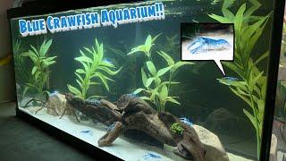 TRANSLUCENT Baby Blue CRAWFISH AQUARIUM!!