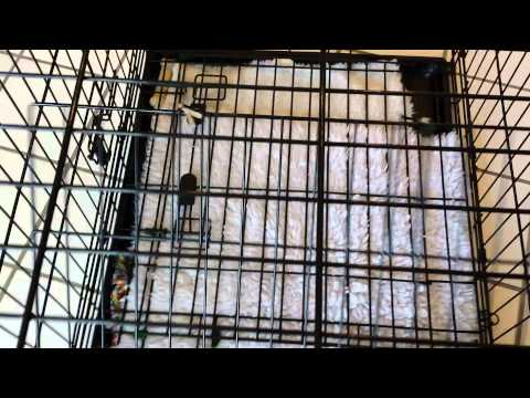 Dog crate - How to set up