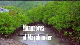 Mangrove forest in Mayabunder
