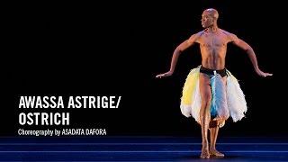 Alvin Ailey: Awassa Astrige / Ostrich By Asadata Dafora
