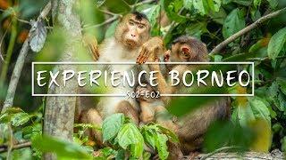 An INCREDIBLE Borneo experience... | Sepilok Orangutans | Travel Vlog, tips and tricks | S02-E02