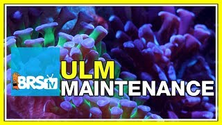 Maintaining an Ultra Low Maintenance Reef Tank | BRStv Tank Trials Ep21