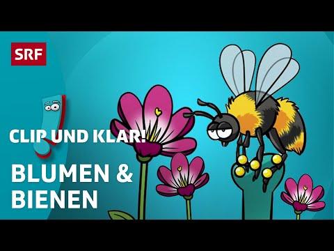 Wie vermehren sich die Pflanzen? | Clip und klar!