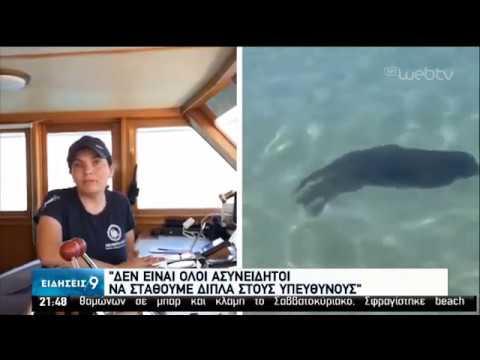 Σκοτώνουν τις φώκιες πριν γεράσουν- Nέο κρούσμα στον Άγιο Νικόλαο Κρήτης | 08/06/2020 | ΕΡΤ