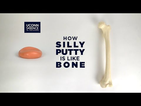 How Silly Putty is Like Bone