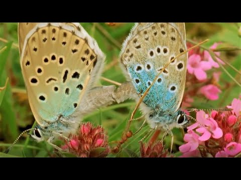 Butterflies are the Most Pristine Creatures of Earth!