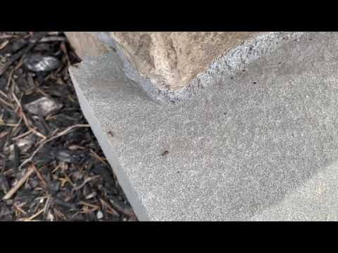 Ants and Their Pheromone Trail