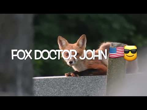 mp4 Doctor John Fox, download Doctor John Fox video klip Doctor John Fox
