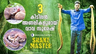 Wow ! Vava rescues three awesome Russell's Vipers | Snakemaster | Latest episode